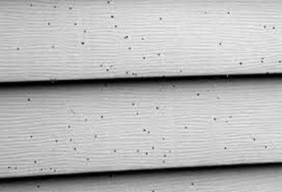 Black Spots on Siding